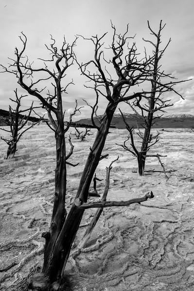 20130511-12 Yellowstone 131.jpg