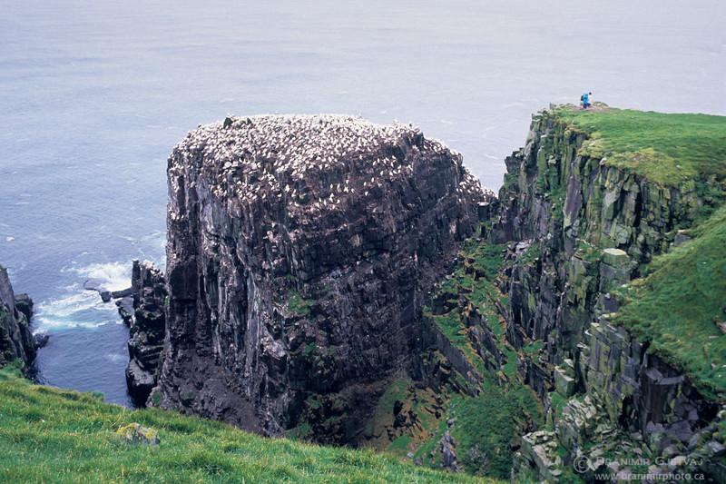 Cape St. Mary's Seabird Ecological Reserve, Newfoundland and Labrador