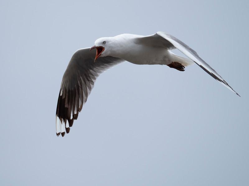 030319 birds _8.JPG
