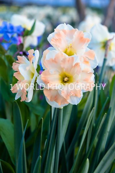 CBG In Spring '17-453-35.jpg