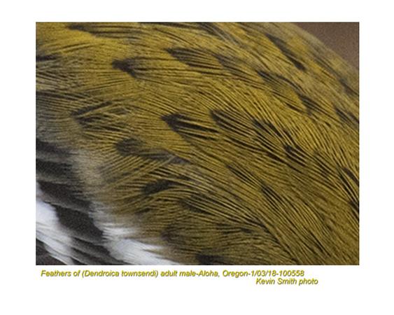 Warbler 100558.jpg