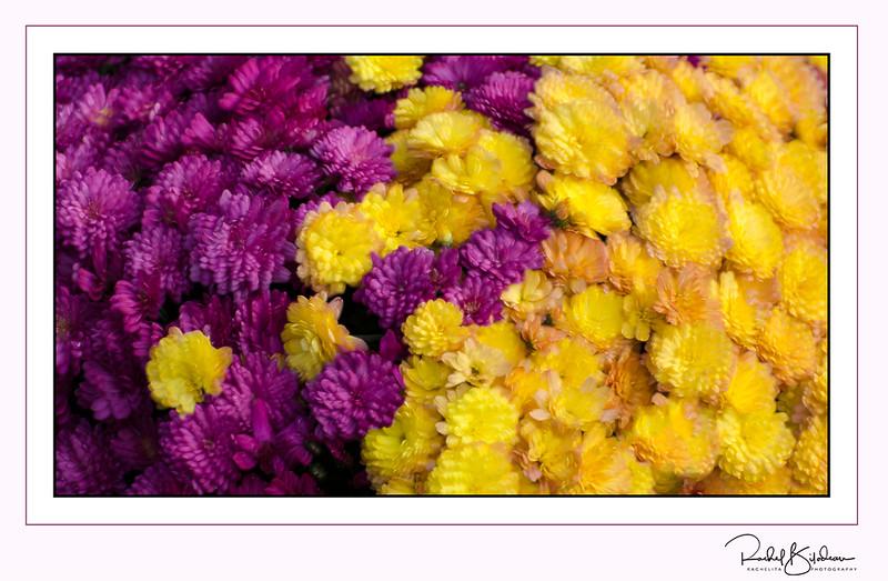 jean-talon-161001-D7000-DSC_2233-sig-blur-2.jpg