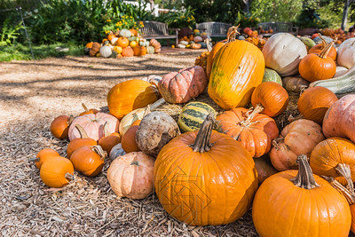 Cluster of pumpkins and colorful gourds