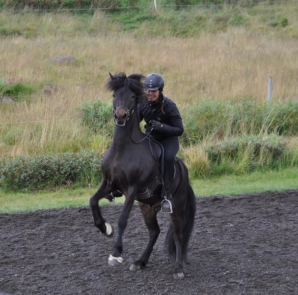 Gauksmyri Farm Horses.jpg