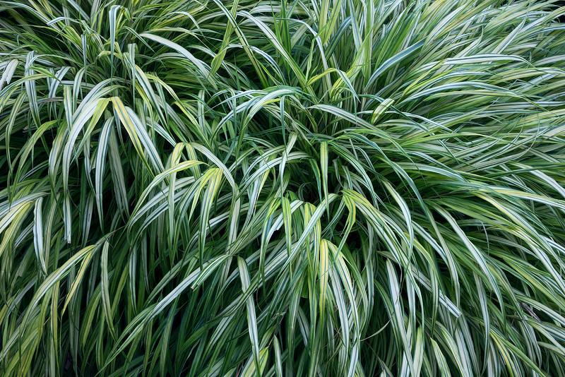 Grassed