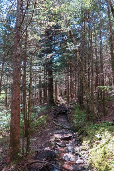 Mountains-to-Sea Trail -- 5,870'