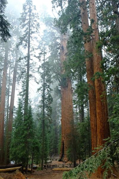California Day 6 Sequoia 05-30-2017 134.JPG