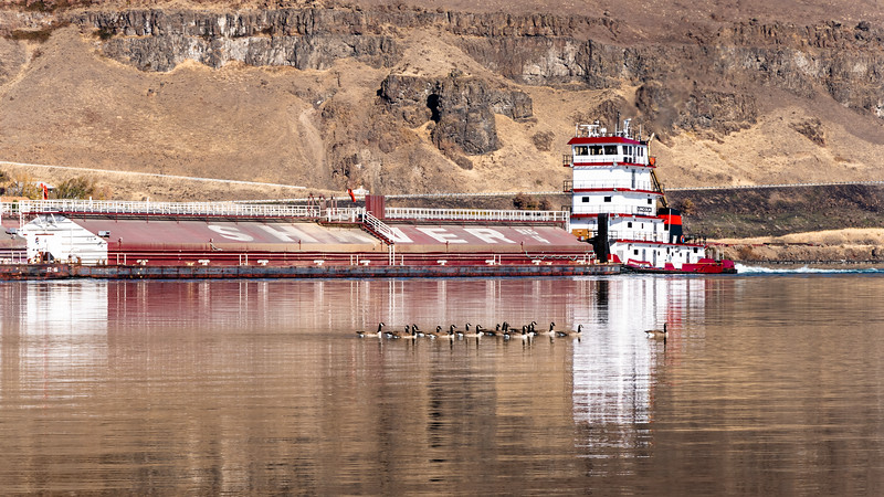 Barge and geese