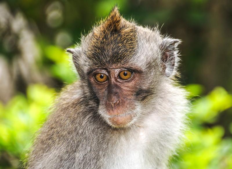 Bali Monkeys-12.jpg