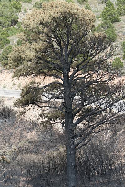20080909-153 - LaSal Mountain Loop - 20 Fire.JPG