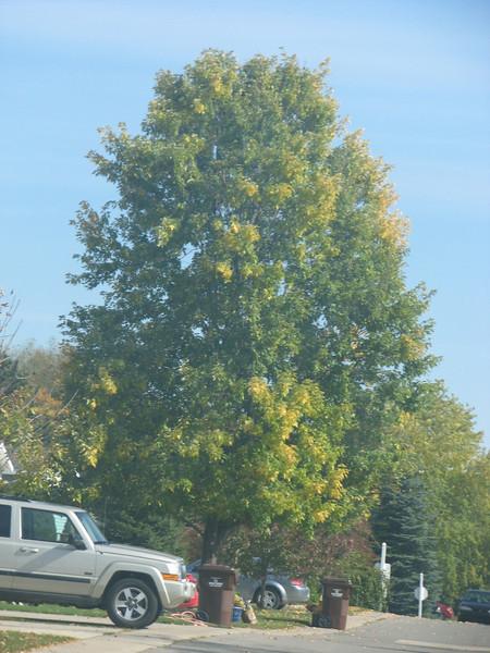 Fall pics 2008 006.jpg