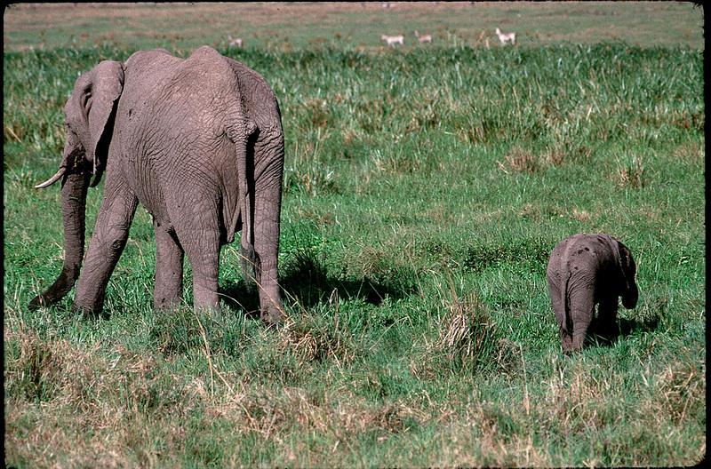 Kenya2_082.jpg