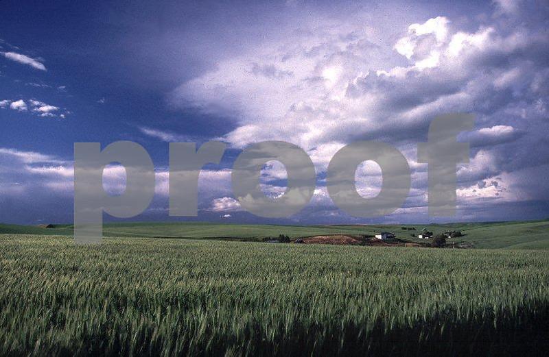 Wheat Rimrock.jpg