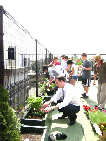 2010 Green Club Middle Roof Planting