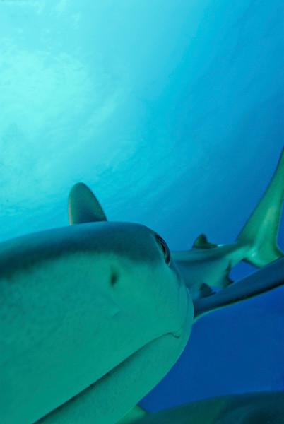 NM3 Shark.jpg