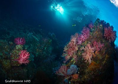Cenderawasih  Bay Wide Angle (2015)