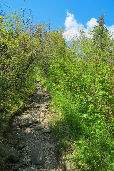 Devil's Courthouse Trail -- 5,660'