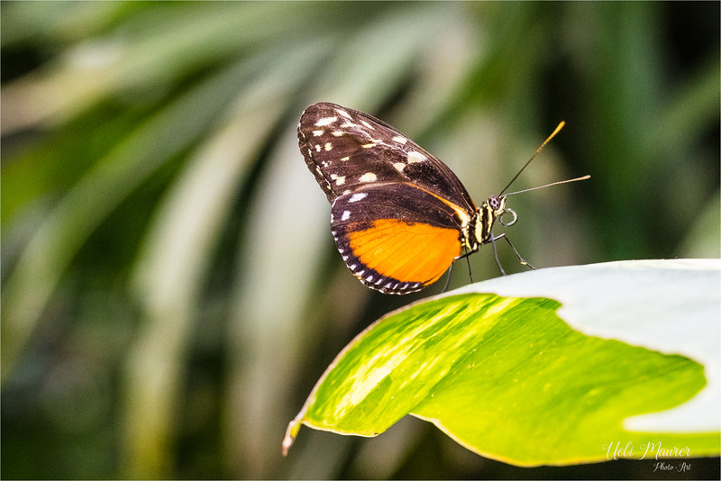 2018-02-07 Papiliorama Kerzers  - 0U5A6364.jpg