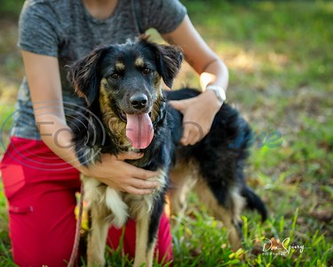 9/2/19 Big Dog Rescue Project by Don Spivey