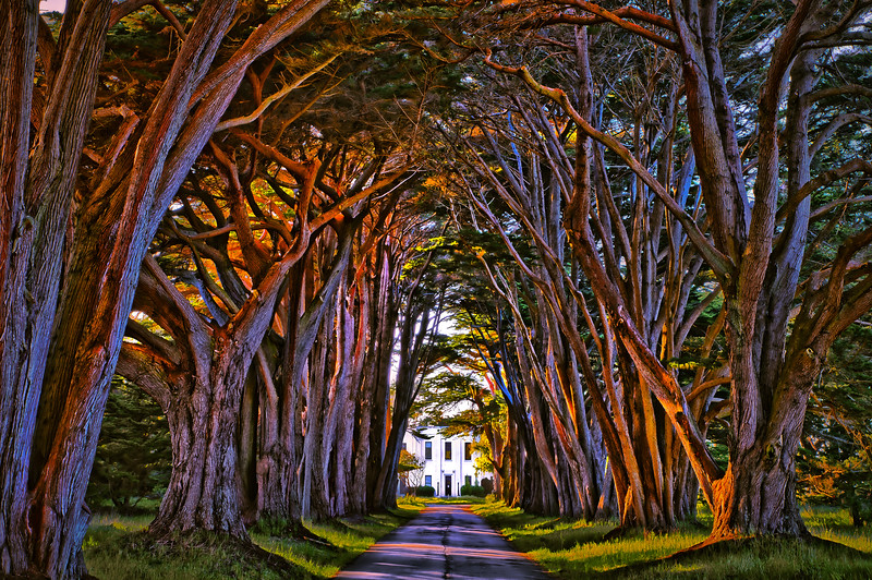 Cypress Tree Tunnel lg.jpg