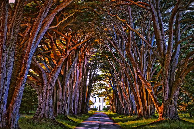 Cypress Tree Tunnel lg.jpg