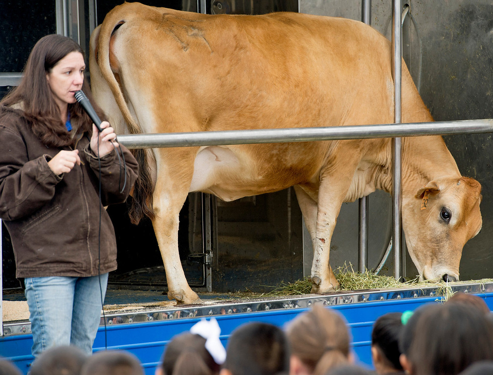 . Foster Elementary students learn all about cows and milk from the Dairy Counsel of California\'s Mobile Dairy Classroom instructor Laura LaFayette with Nestle the Jersey cow at the Baldwin Park campus April 15, 2013.   (SGVN/Staff photo by Leo Jarzomb)