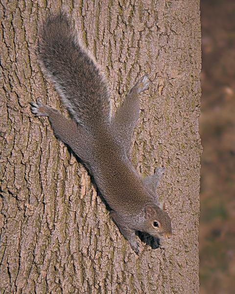 sx50_squirrel_fauna_079.jpg