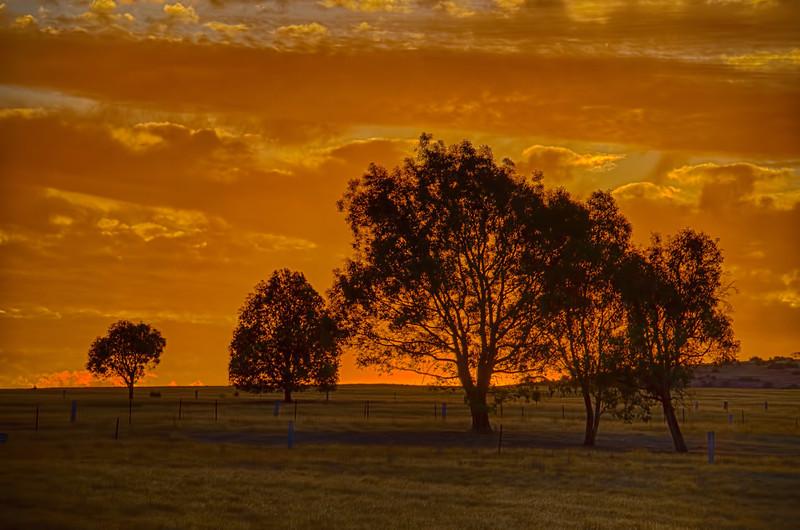 Australian bush silhouette