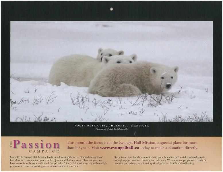 2009 Passion Campaign Calendar Dec. 2008 Polar Bear Cubs, Churchill, Manitoba page.jpg