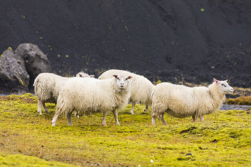 Iceland19_-1200.jpg