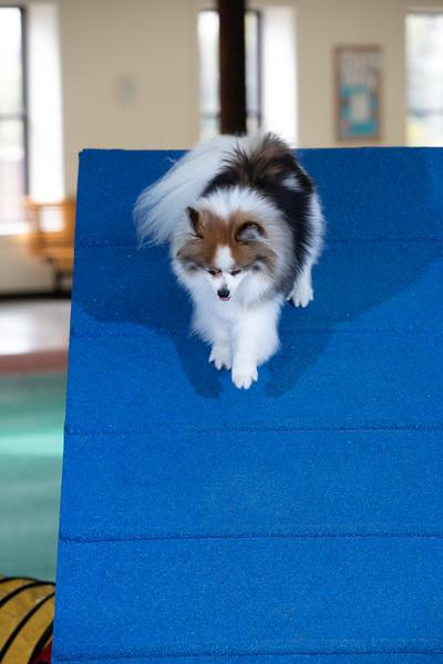 SPCA_Agility-92.jpg