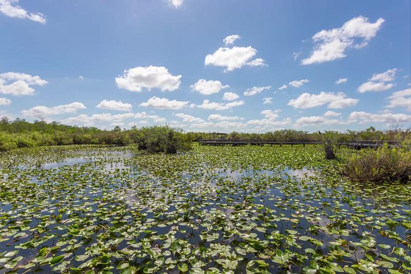 everglades lilly pond-1.mp4