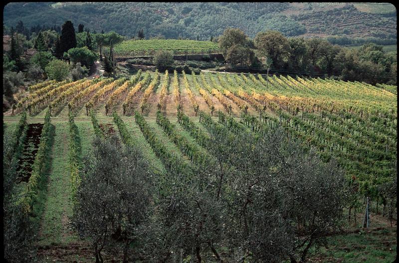 ItalyNapa1_025.jpg