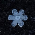 snowflakes-1573.jpg