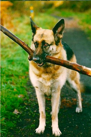 2012-11-26 Dogs 15.jpg