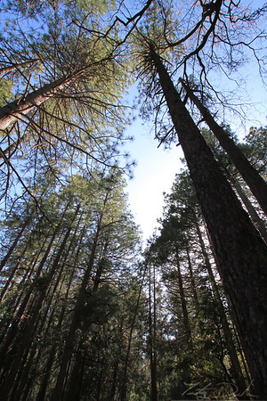 Camping in Idyllwild