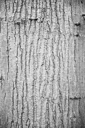 nature patterns...