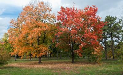 Forest Park October 24 2010