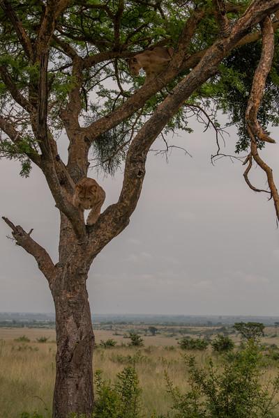 Uganda_T_QE-1920.jpg