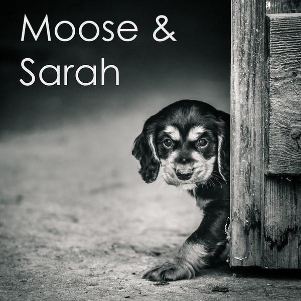 Moose-Icon.jpg