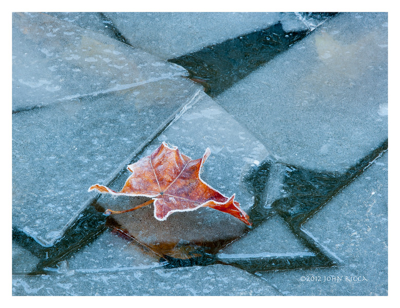 Leaf on Ice.jpg