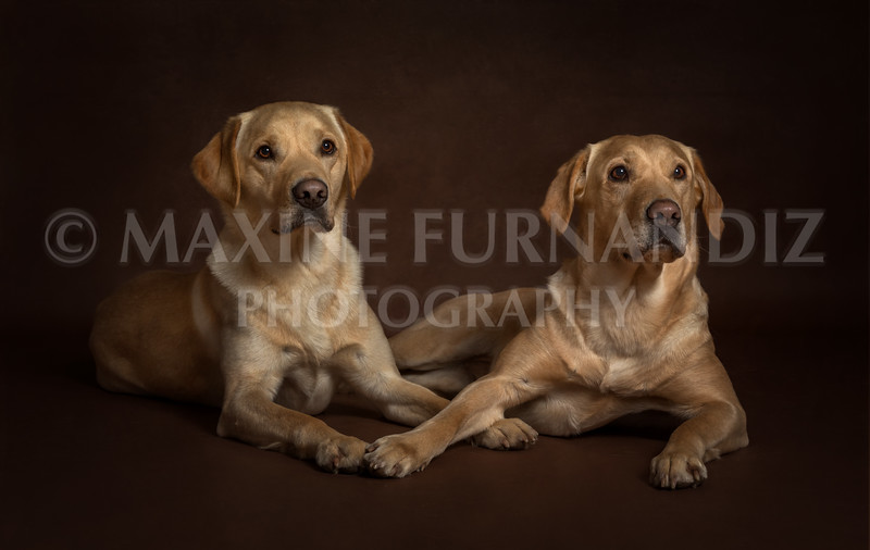 Spalding-9353 Ailsa and Brodie.jpg