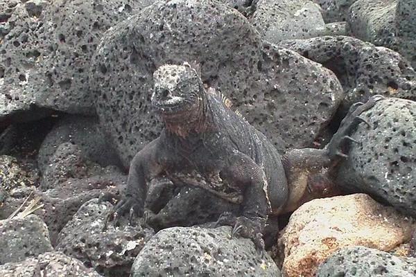 2010 Galapagos Program