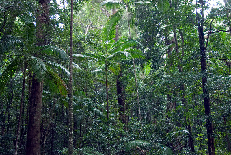 Rainforest Scene 1, Fraser Island - Queensland, Australia