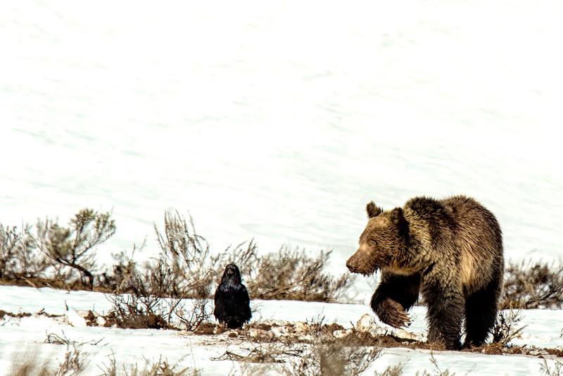 Yellowstone_May_2014_FH0T3996.jpg