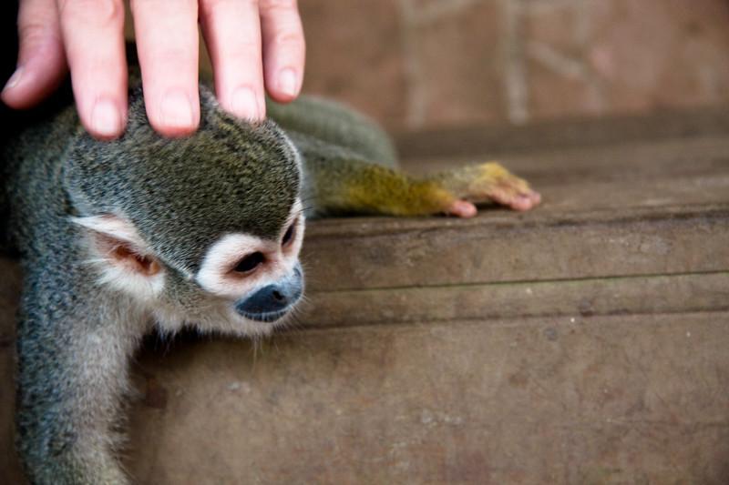mom-and-monkey_4890777730_o.jpg