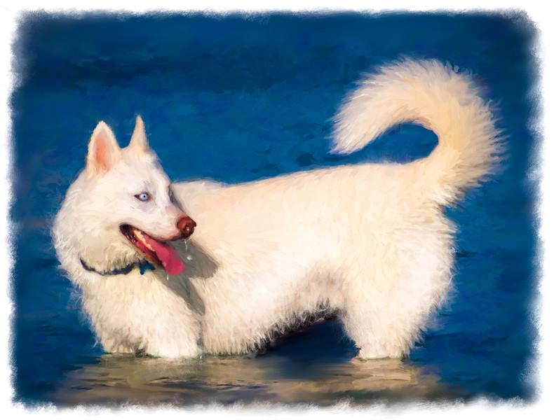 doggie-portrait-2.jpg