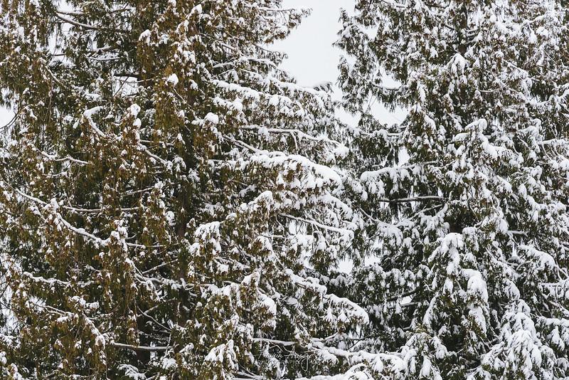 SnowWedgwoodFeb2019-3.jpg