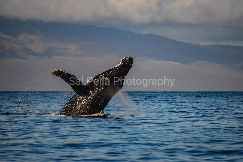 Maui Hawaii 2013