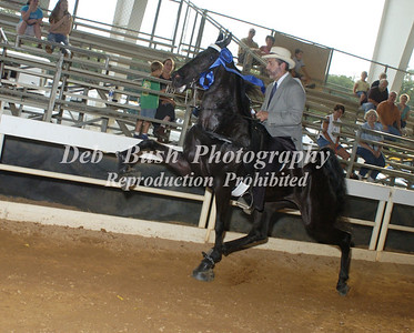CLASS 14  AMATEUR 50 AND OVER SPECIALTY
